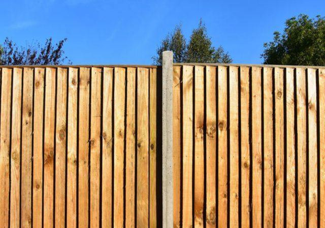 Solid backyard wood fence with treeline