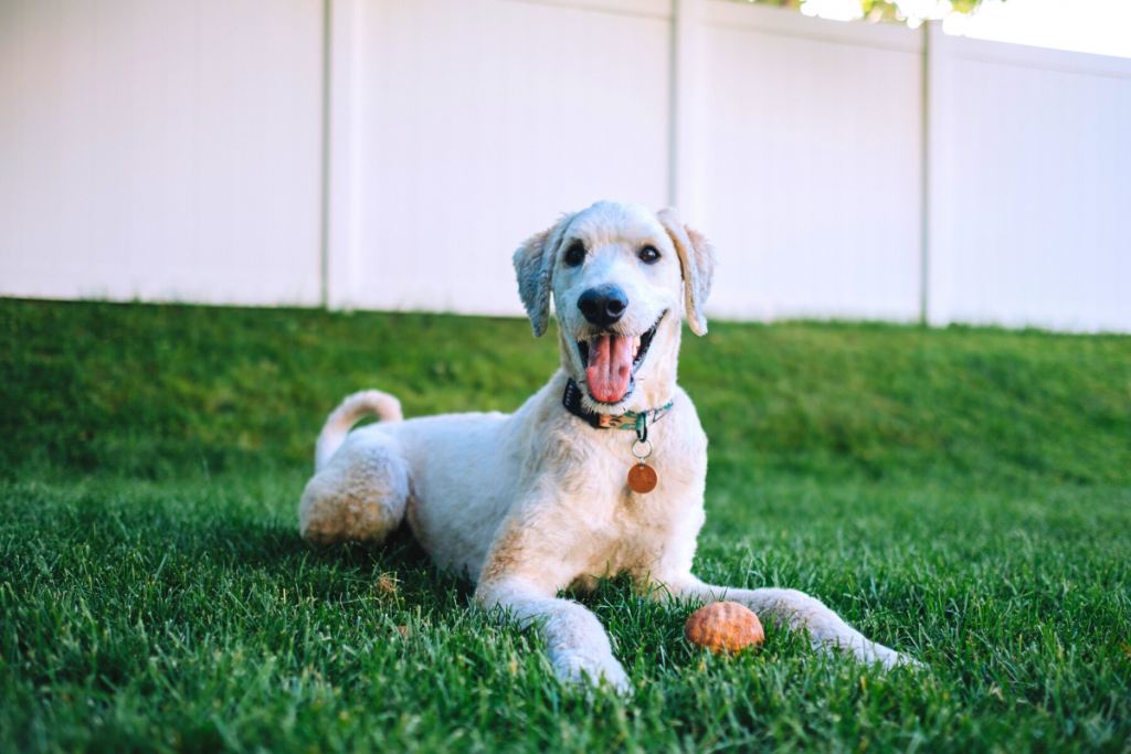 Are Invisible Fences Good for Dogs?